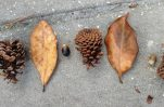 Nature Number Puzzles