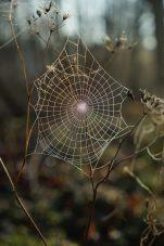 Spider Stone Puzzle
